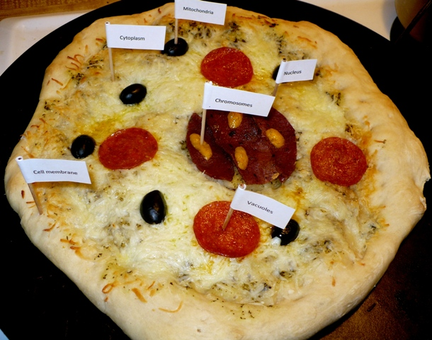 Animal Cell School Project Ideas http://leofwynne.typepad.com/adventures/2009/02/science-is-a-pizza-cake.html