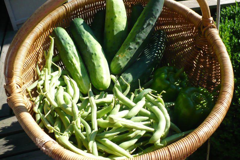 Summer harvest 001
